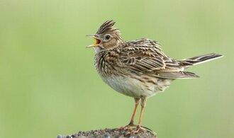 Vědci varují: V Česku prudce ubývají ptáci, krajina je nestabilní