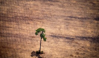 Naděje na záchranu? Odlesňování Amazonského pralesa zpomaluje