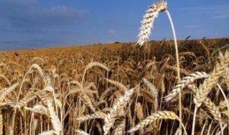 Globální oteplování může výnosy ze zemědělství srazit až o polovinu, tvrdí studie