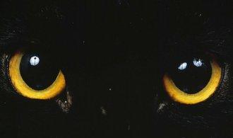 Ekologický aktivista chce zbavit Nový Zéland koček