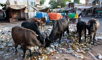 Indie vyrukovala do boje proti ulicím plným výkalů
