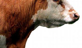 Mléčný armagedon: Konec kvót zatřese s českým mlékem