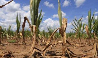 MZe kvůli suchu předčasně vyplatí zemědělcům devět miliard