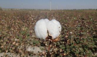 Čína se zbavuje bavlny, cena na trhu padá