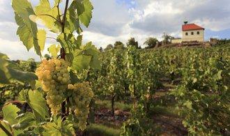 Dienstl i Železný prodělávají ve víně desítky milionů
