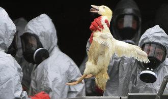 V Česku se objevilo druhé ohnisko ptačí chřipky