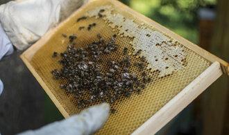 Evropská unie výrazně zvýšila ochranu včel, omezuje používání insekticidů