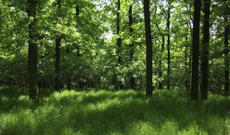 Uniles ze skupiny Agrofert zvítězil v miliardovém tendru Lesů České republiky