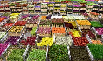 Květinový byznys online - způsob, jak darovat opravdu čerstvé květiny