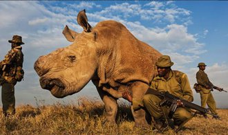 Poslední žijící samec nosorožce severního bílého zemřel, patřil české zoo