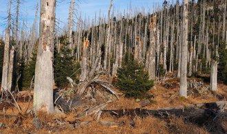 Soukromí lesníci žádají stát o podporu, za kůrovce chtějí stamilióny