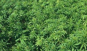 """""""Marihuanové akcie"""" prudce rostou, výrobce cigaret Marlboro investuje do producenta konopí"""
