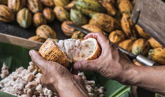 Kakao domestikovali v Ekvádoru už před 5500 lety