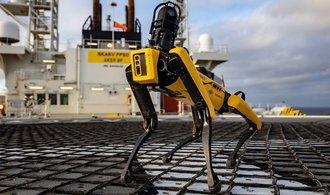 První robot Spot trénuje na pražském ČVUT. Zaplatila ho americká armáda