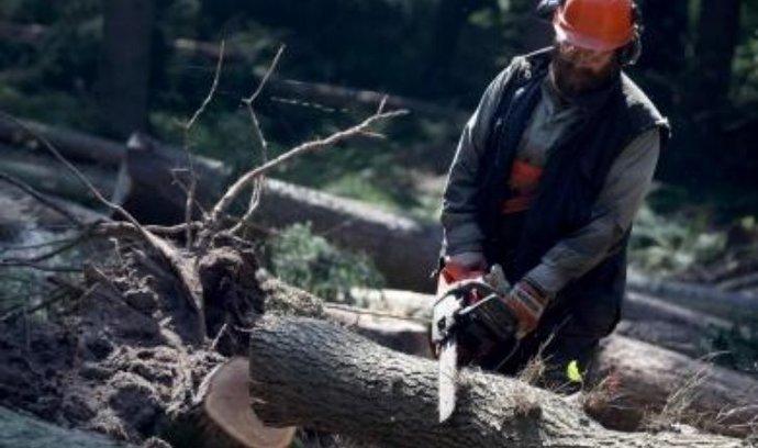 Stát zvažuje prodej podílu v Hradecké lesní