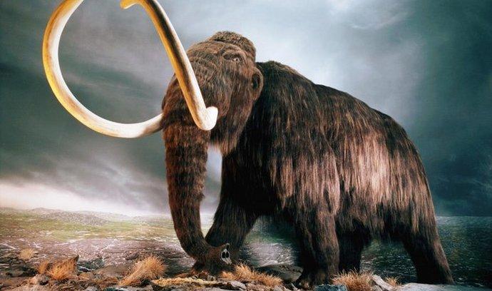 Na Sibiři našli vzácně zachovalého mamuta