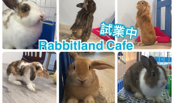 Další koutek pro milovníky zvířat. V Hongkongu otevřeli