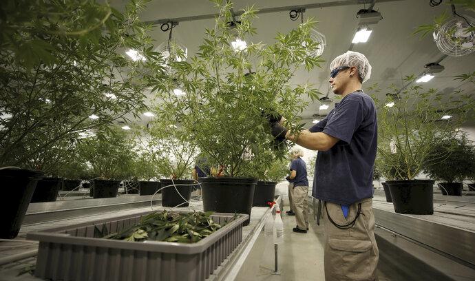 Kanadská firma Canopy Growth koupila největší českou konopnou společnost za desítky milionů korun