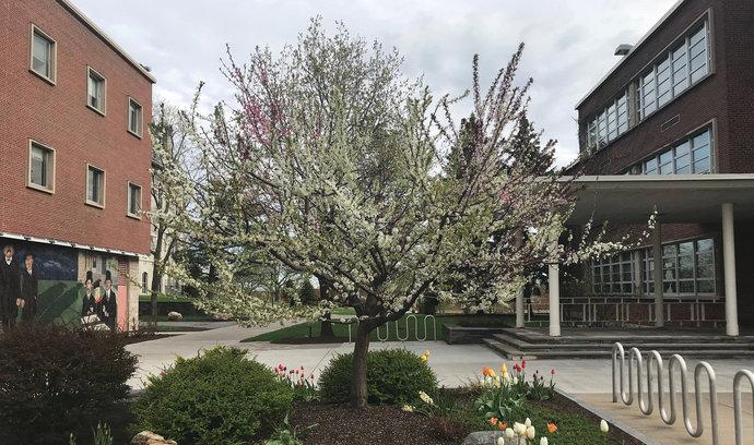 """Úžasné: """"Magický"""" strom plodí 40 odlišných odrůd ovoce"""