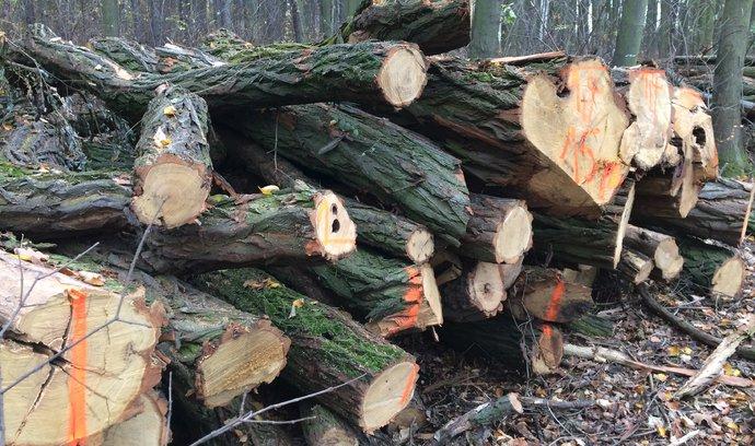Lesníci varují: Kůrovec může způsobit půlbilionové škody