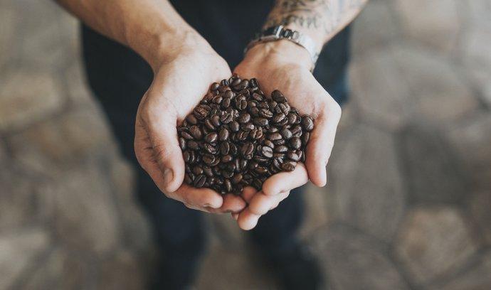 Temná budoucnost kávy: pokles genetické rozmanitosti může ohrozit produkci