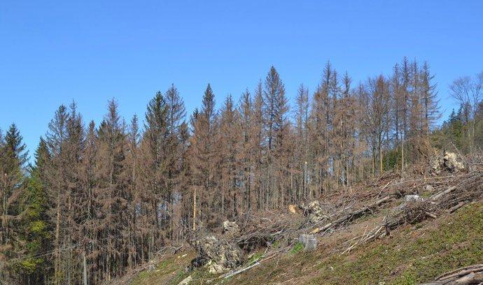 Češi zkouší v boji proti kůrovci drony. Technika umí odhalit napadené stromy