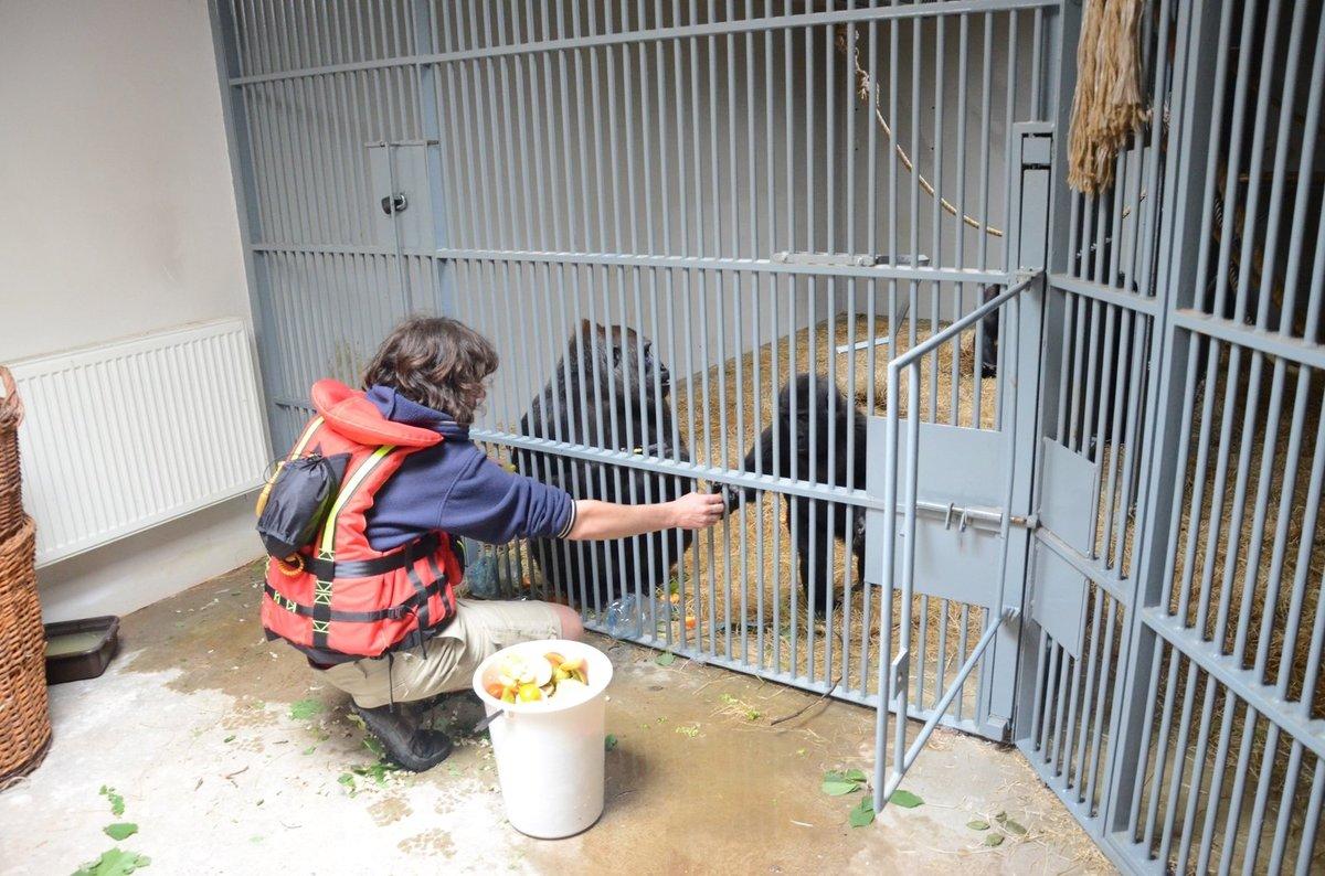Ve Dvoře chystají pavilon pro miláčky pražské zoo – gorily.