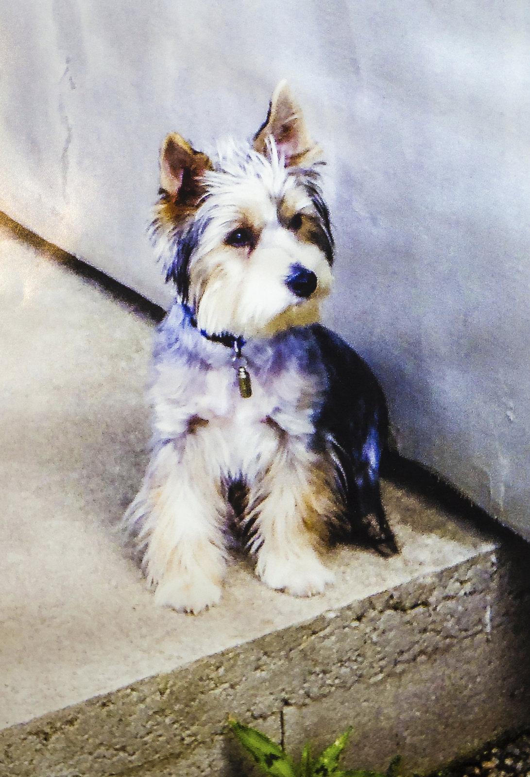Statečný Monty obětoval za Denisu svůj psí život.
