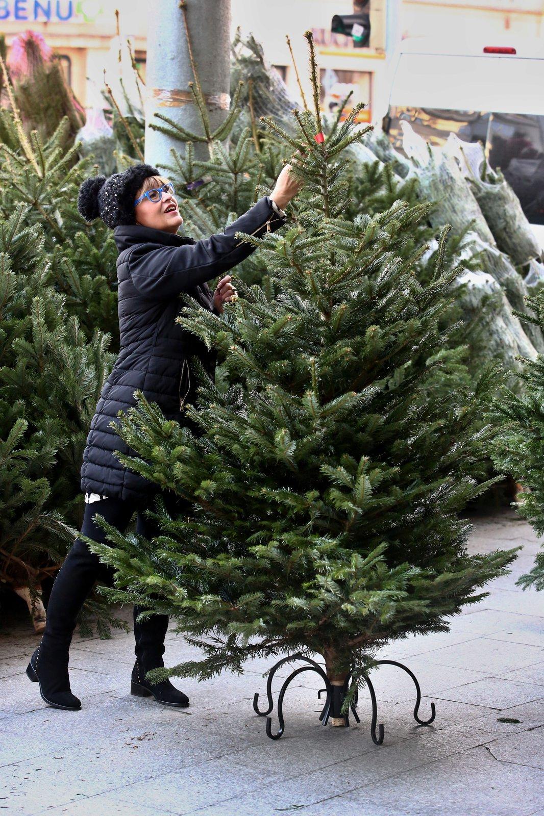 Petra Černocká si vybrala velký vánoční živý stromek.