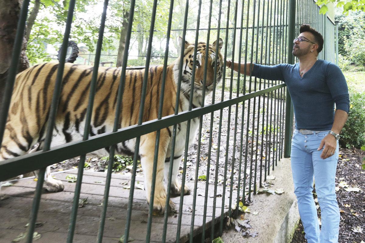 Osmany měl tygra odmalička.
