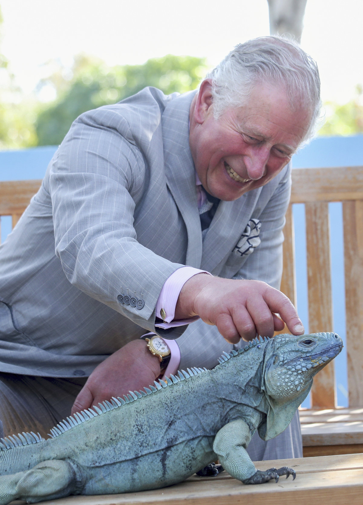 Princ Charles hladil leguána