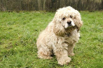 Za Denyho roztomilým kukučem se skrývá mnohokrát zklamaná psí duše.