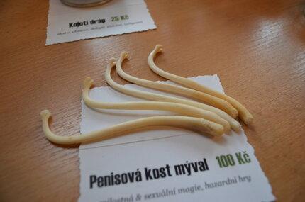 Penisová kost z mývala je pravá!