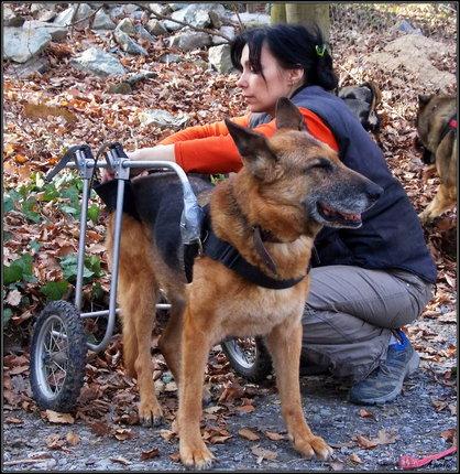 Eliška (39) z Brna založila psí hospic a pomáhá pejskům seniorům.