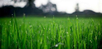 Jak mít dokonalý trávník?