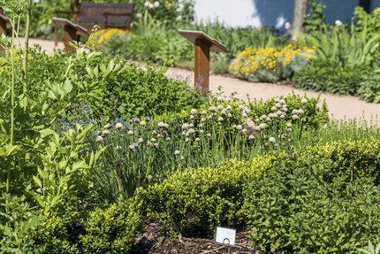Na zahrádce svaté Hildegardy pěstují různé druhy léčivých rostlin.