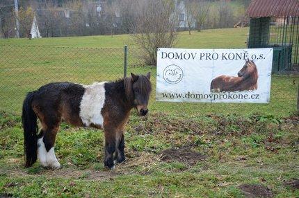 Domov pro koně