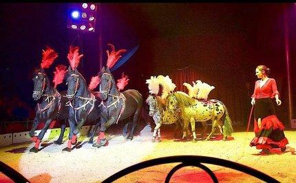 Cirkus - drezura koní