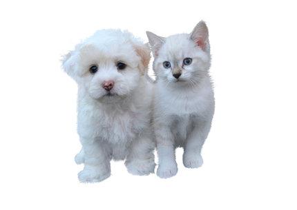Pas a kočka