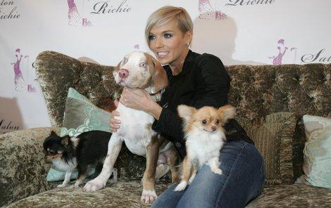 Mašlíková a její psí rodina. Ke dvěma čivavám si před několika týdny pořídila leopardího psa. Všichni se museli vměstnat do bytu 2+1.