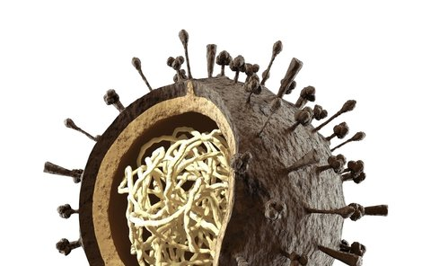 Virus prasečí chřipky.