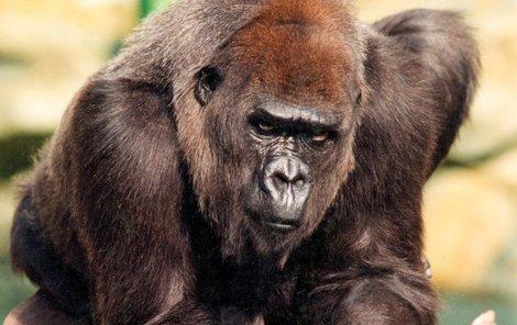 Judita žila ve zlínské zoo 16 let.