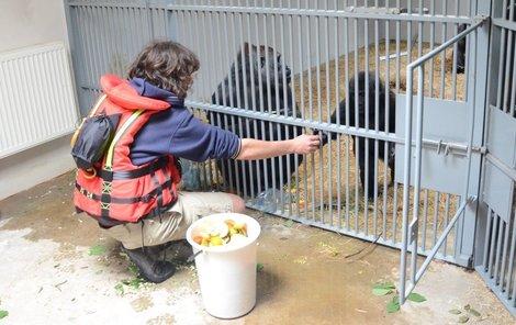 Gorily jsou zatím v protipovodňové věži.