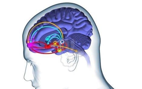 Lidský mozek je pro vědu stále ještě záhadou.