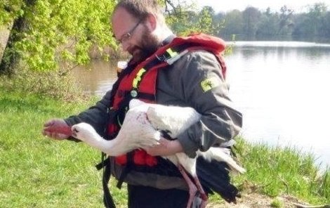 Zachráněný čáp v náruči jednoho z hasičů.