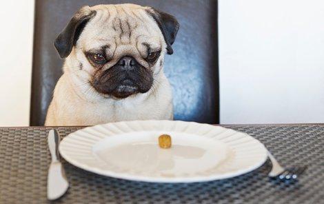 Plynatost u psů může znamenat i vážnou nemoc.