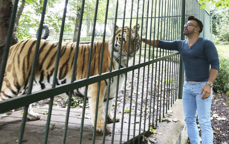 Bagheera už je v tygřím nebi...