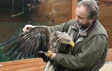 Orel má rozpětí křídel větší než 2 metry.