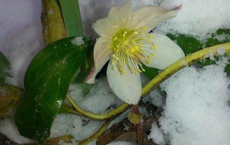 Zima ještě neskončila, ale jaro už se hlásí o slovo...