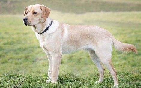 Sam je mladý pes, který se ještě hodně naučí.